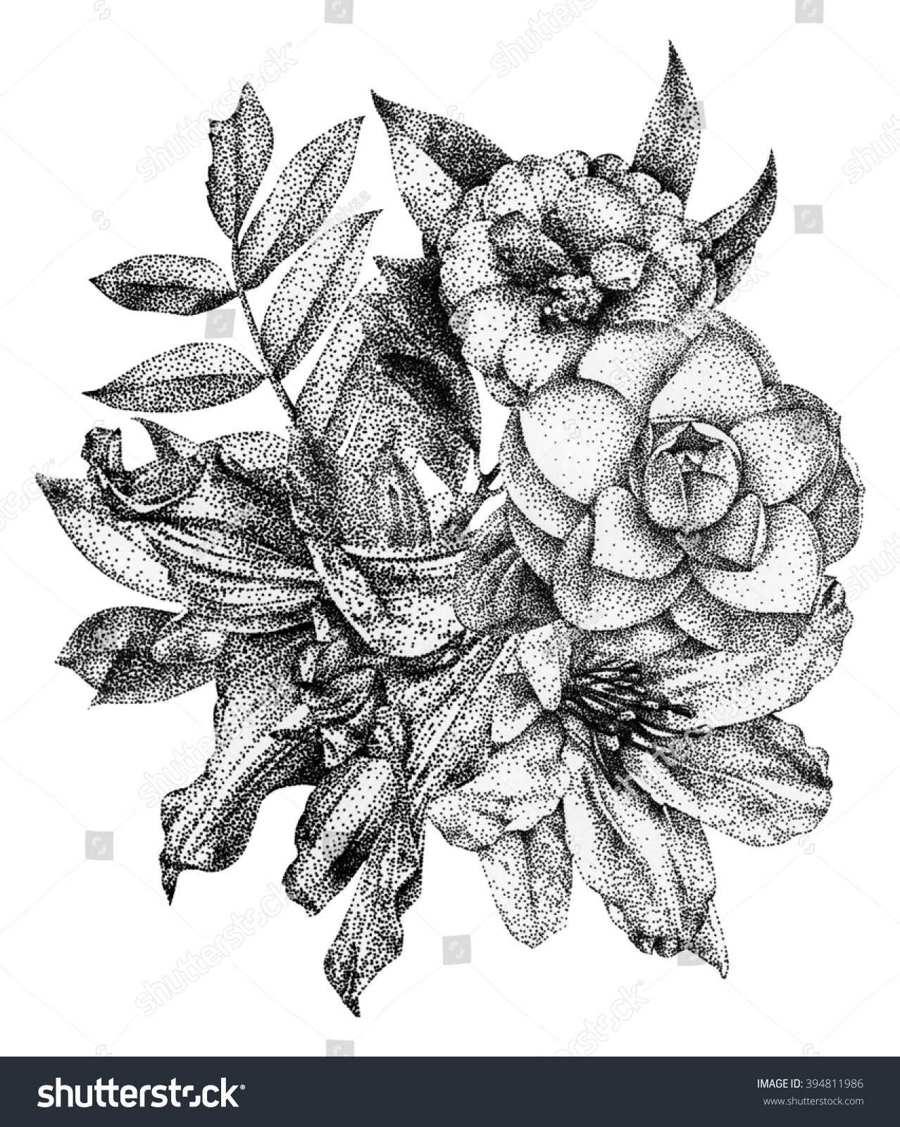 Composition Different Spring Flowers Plants Drawn Stockillustration