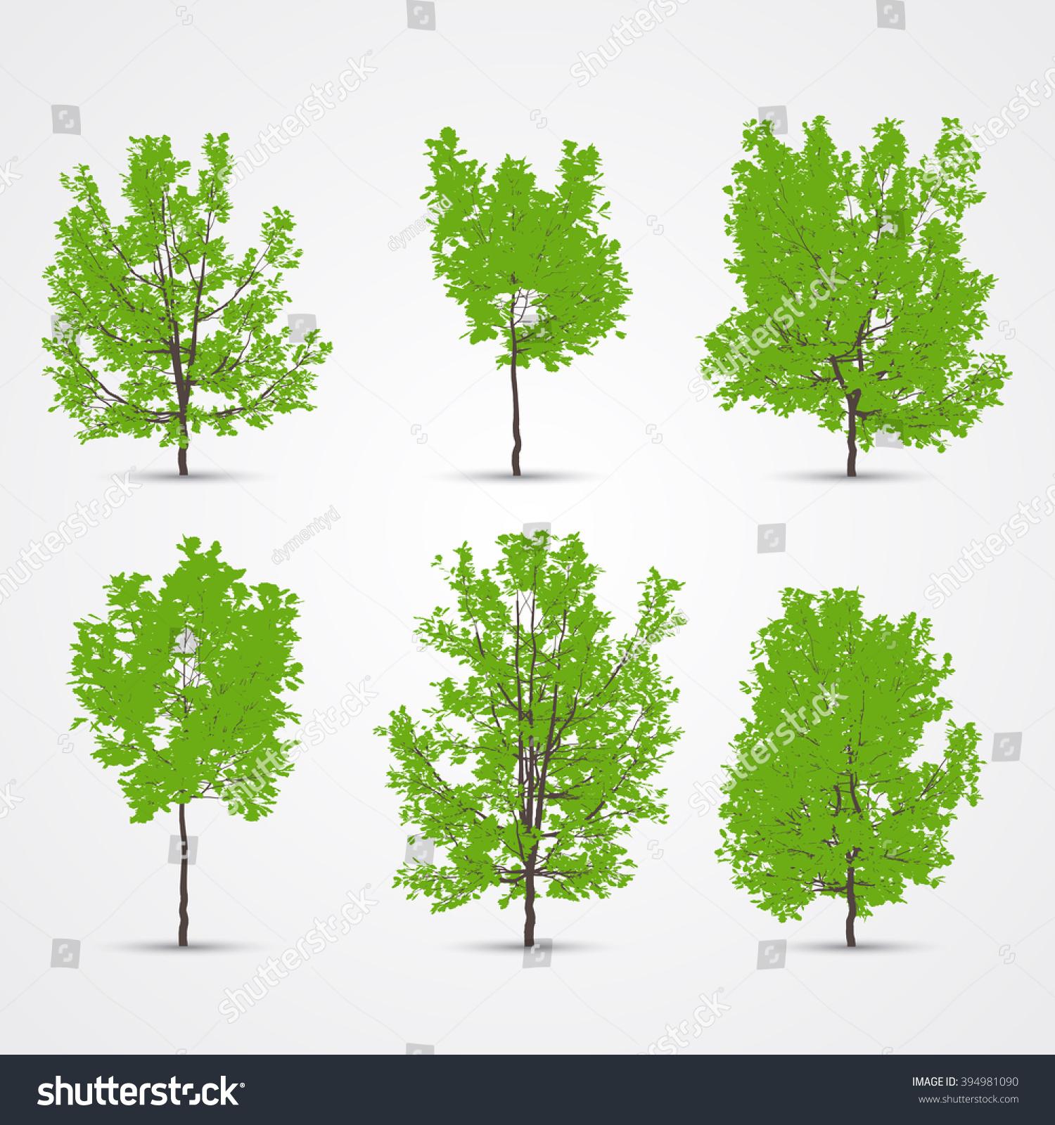 Oak Tree Color Planting Greenery Flat Stock Vector 394981090 ...