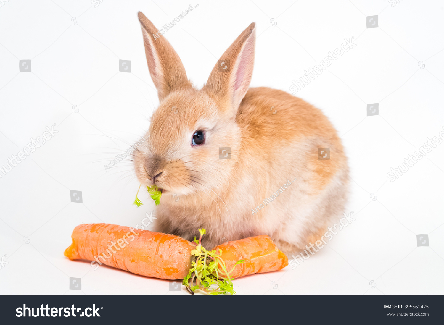 Russian easter bunny eating huge carrot