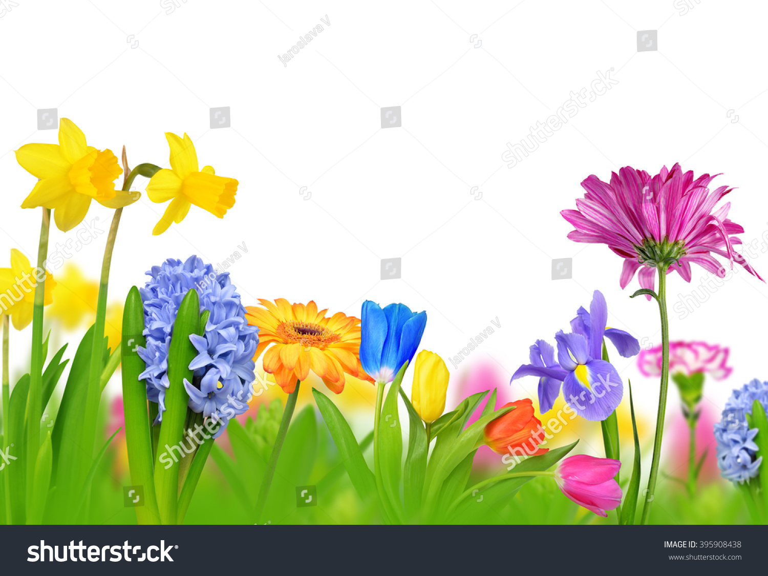 Colorful Spring Flowers Isolated On White Stock Photo Edit Now