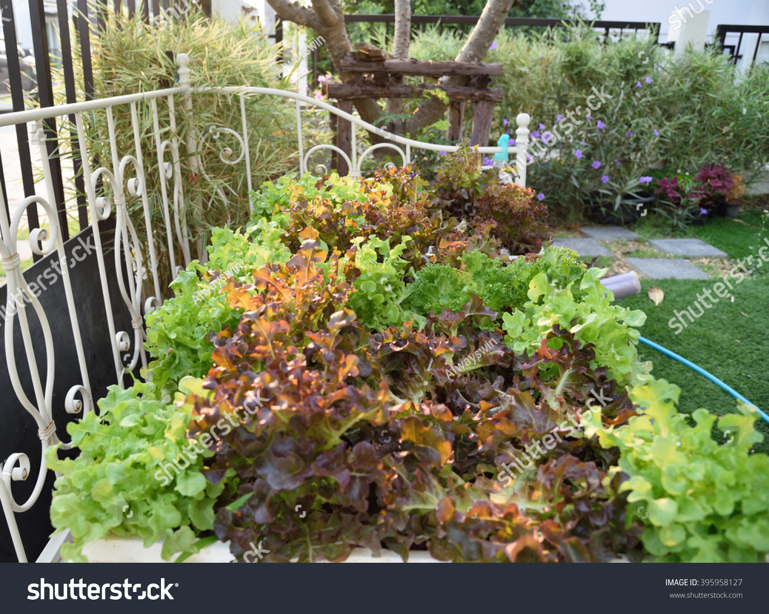 Home Salad Garden Vintage Bed Growing Stock Photo (Royalty Free ...