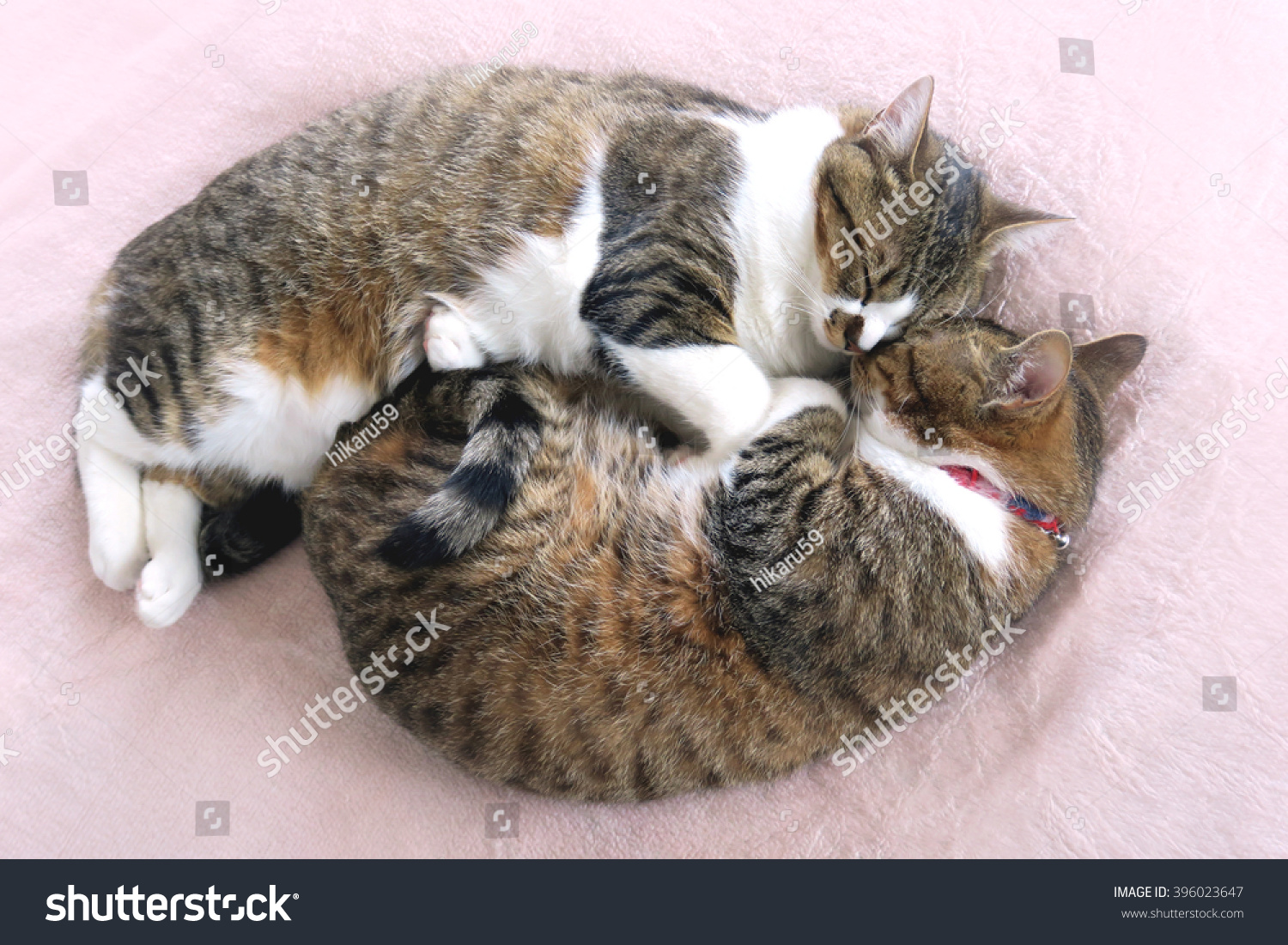 Two Cats Sleeping Together Pronunciation Japanese Stock Photo Edit Now 396023647