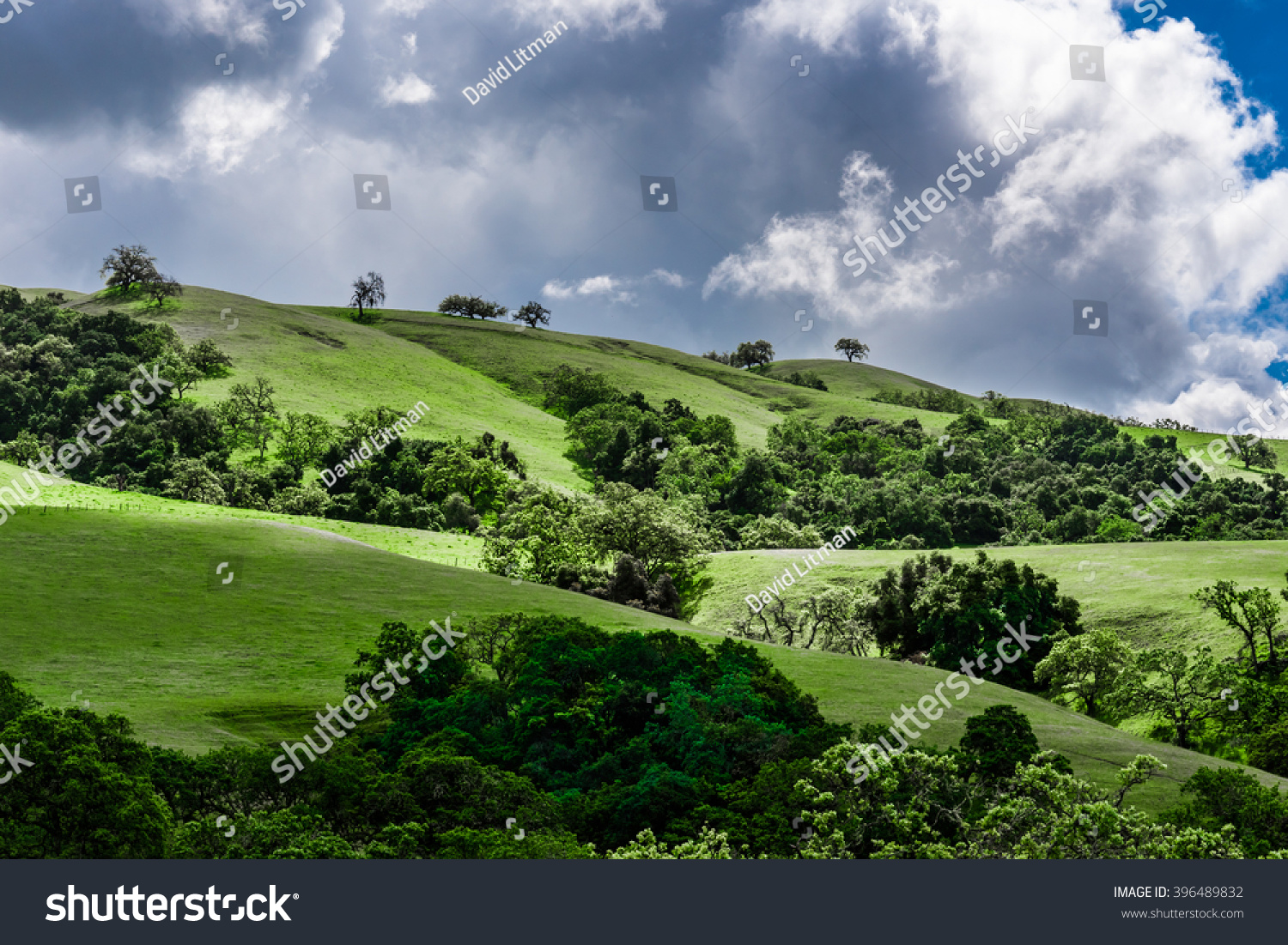 A scenic panoramic view of rolling grass covered hills with coastal live oak trees in Carmel Valley, in Monterey Countty, California, with clearing clouds as a storm passes by.