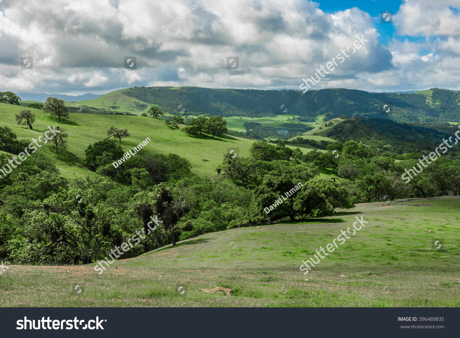 A scenic panoramic view of rolling grass covered hills with coastal live oak trees in Carmel Valley, Monterey County, California, with clearing clouds as a storm passes by.