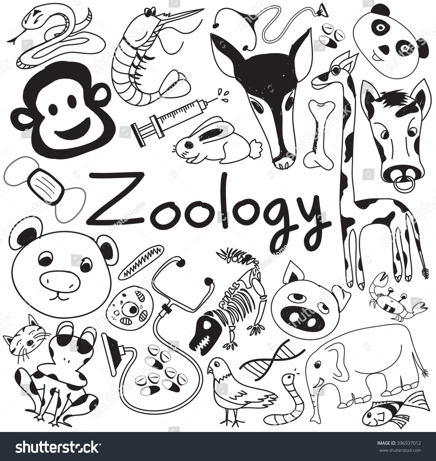 Zoology Biology Doodle Handwriting Icons Animal Stock Vector ...