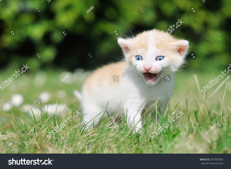 Adorable Kitten Grass Stock Shutterstock
