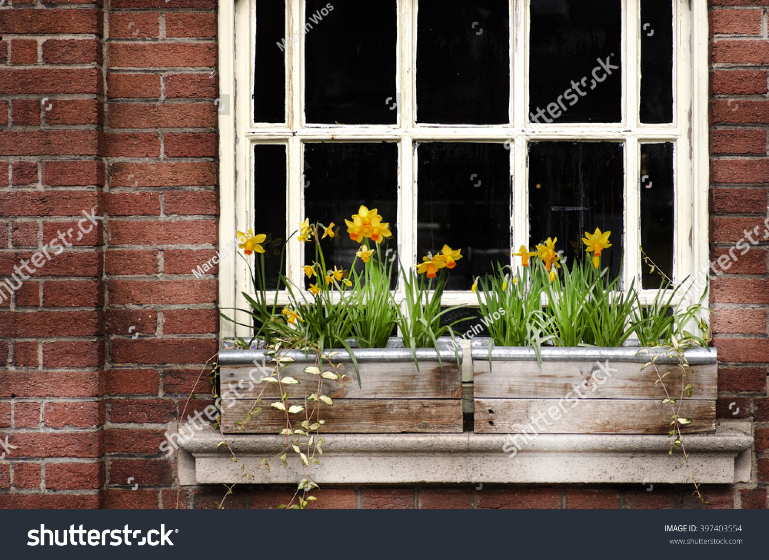 Detail Wooden Window Flowers Box On Stock Photo Edit Now 397403554