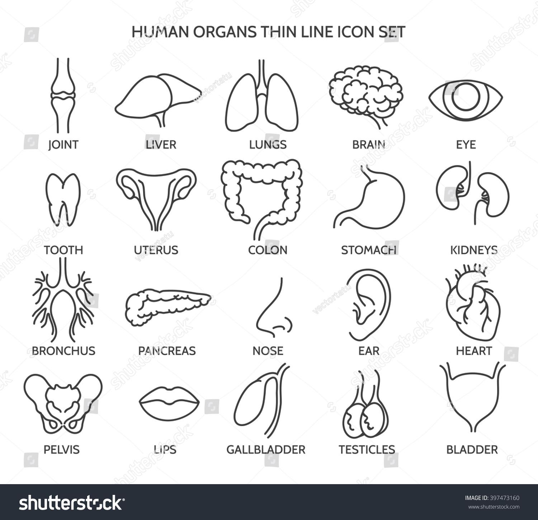 Human Organ Signs Body Parts Symbols Stock Vektorgrafik Lizenzfrei