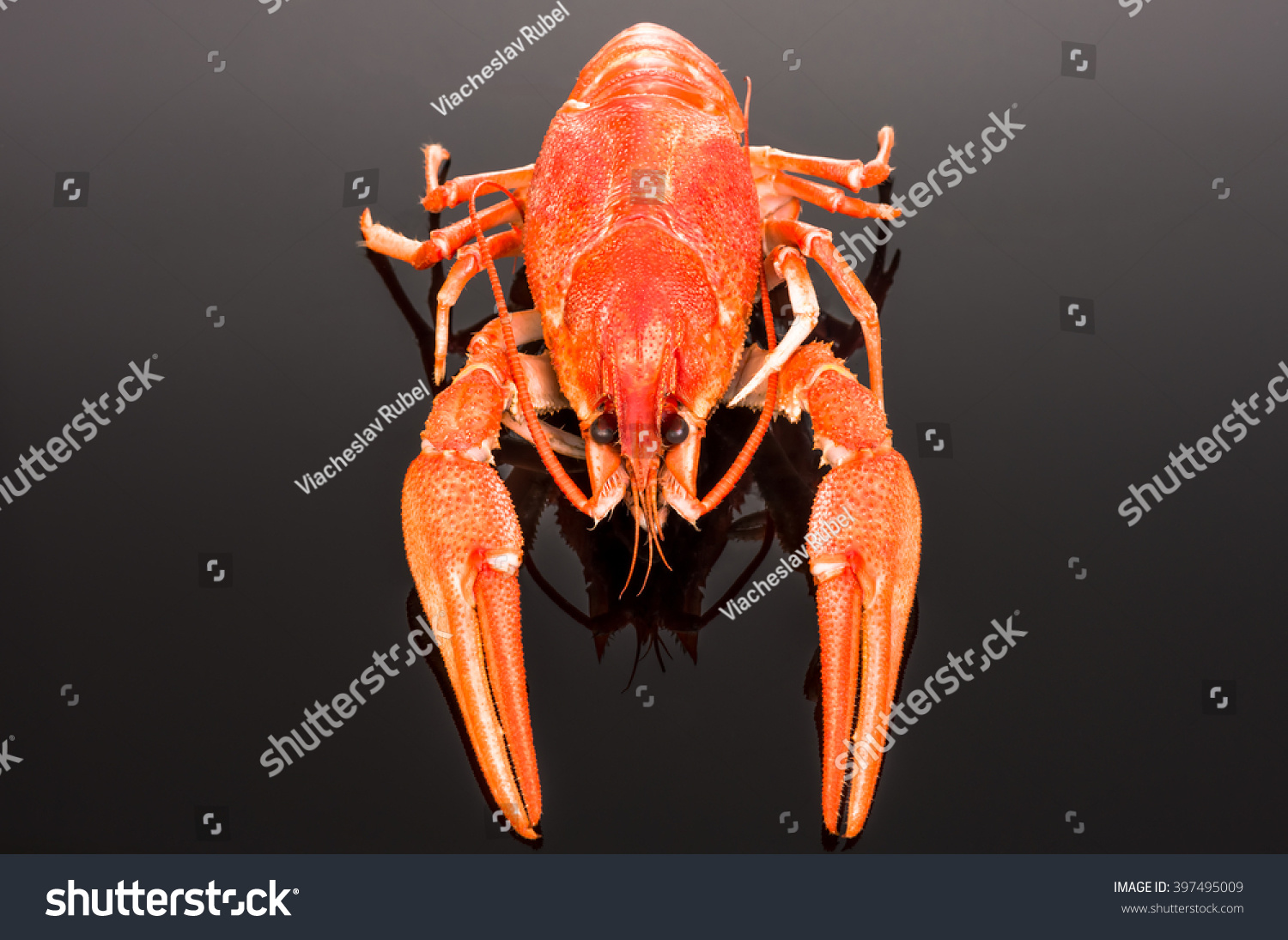 Boiled Crawfish On Mirror Dark Background Stock Photo (Royalty Free ...