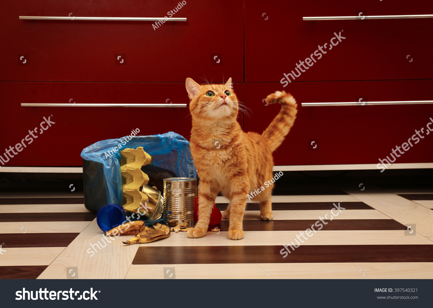 red cat near full inverted garbage basket on kitchen floor stock