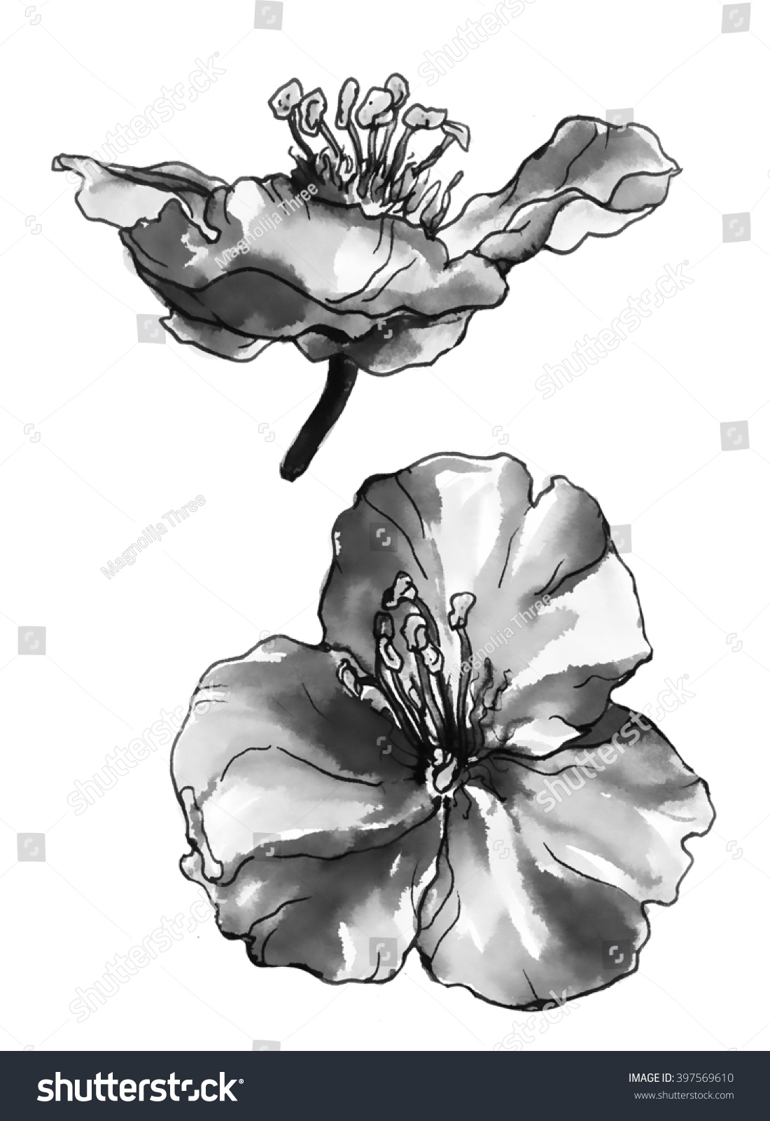 Aquilegia grannys connet columbine tropical flower stock aquilegia grannys connet or columbine tropical flower isolated on white background hand drawn izmirmasajfo Image collections