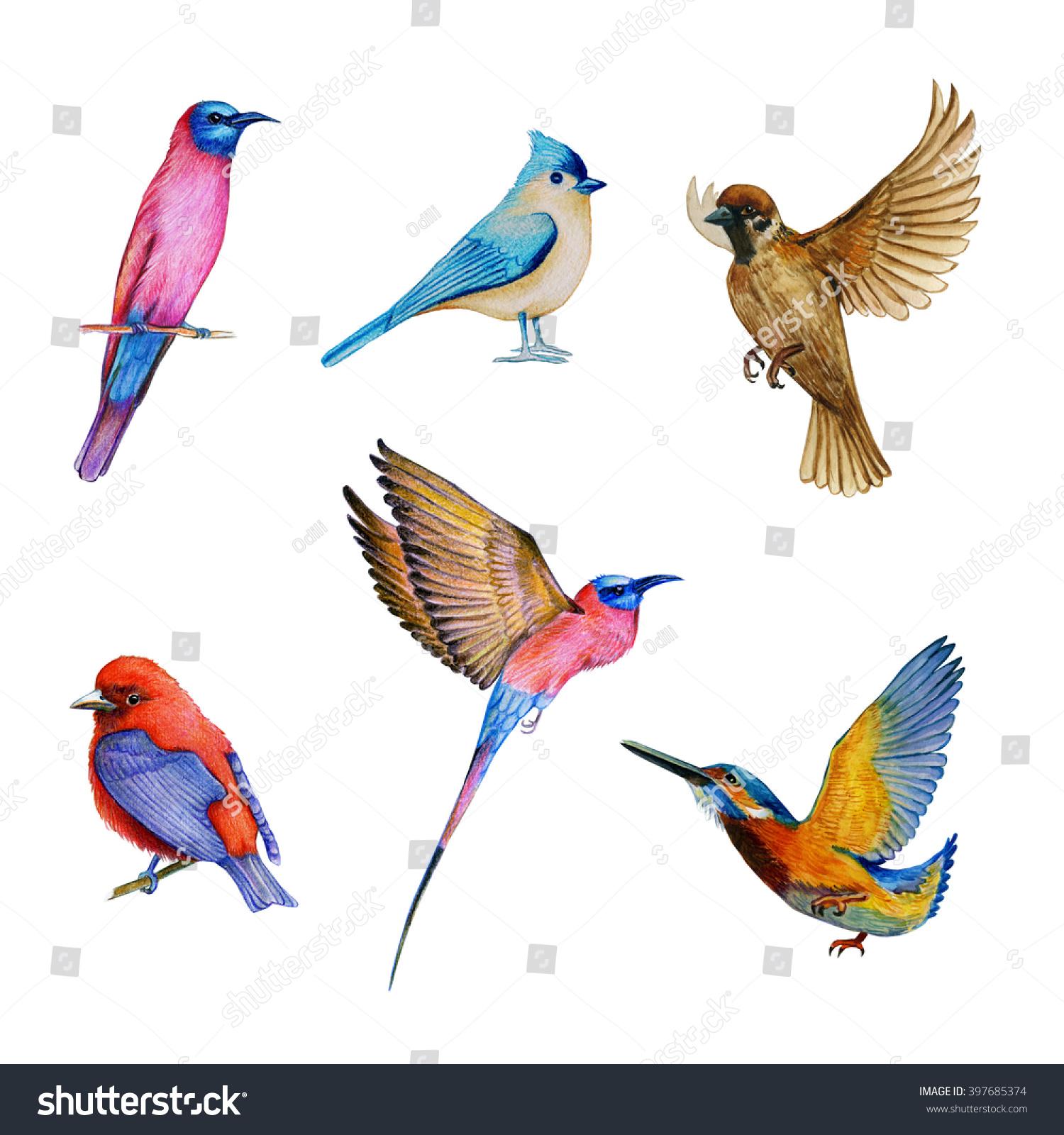 flying birds game