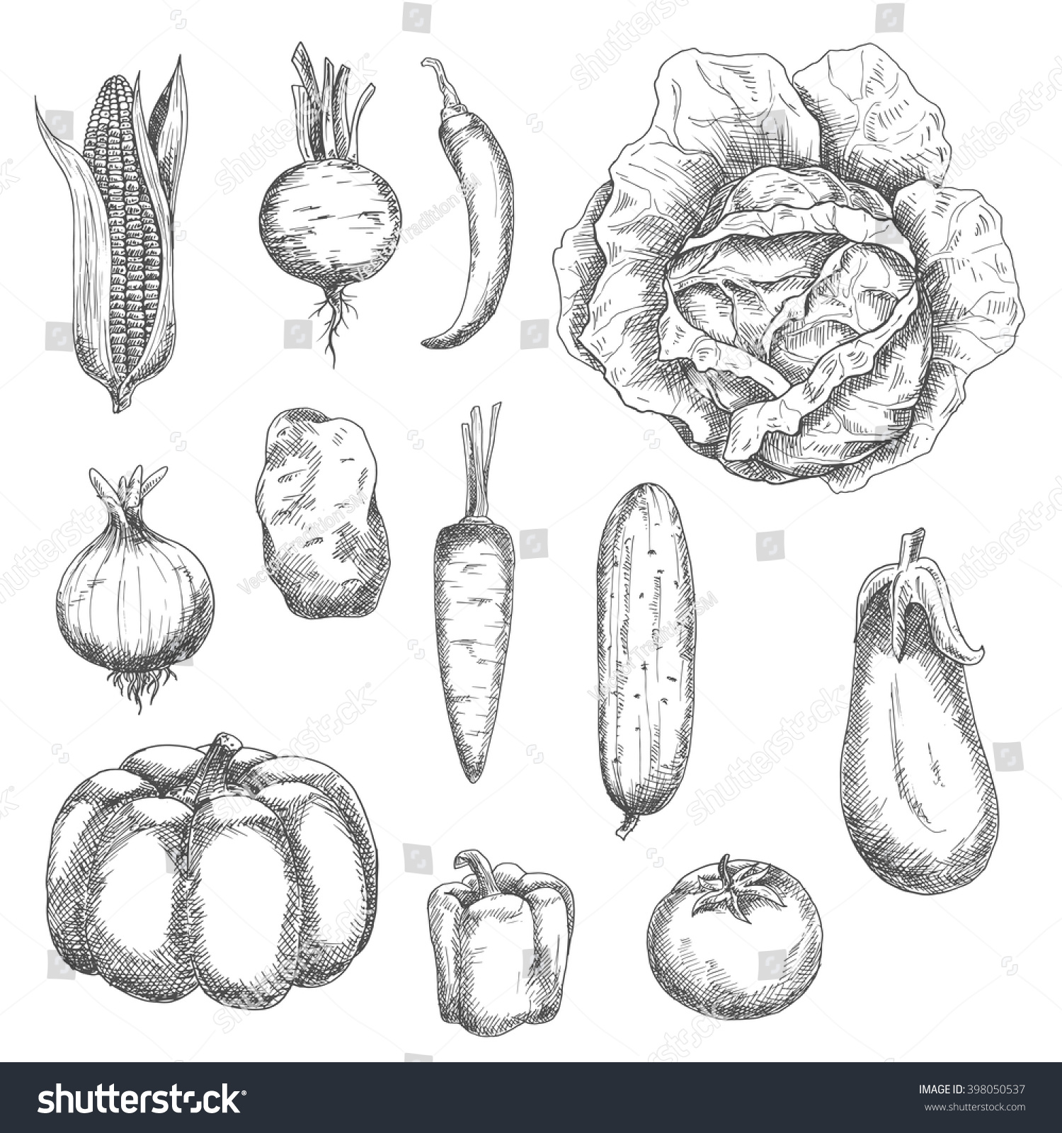 Eggplant kitchen accessories - Sketches Of Corn And Tomato Potato And Carrot Cabbage And Onion Cucumber And