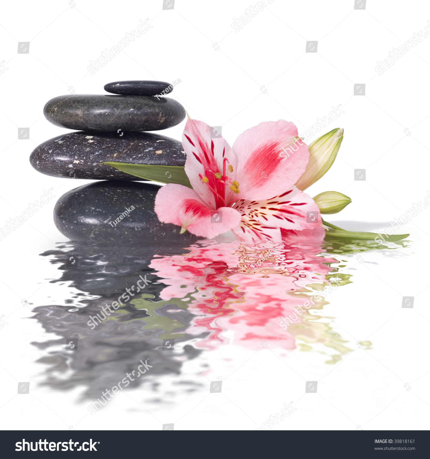 White Orchid Water Pink: Spa Still Life Wild Pink Orchid Stock Photo 39818161