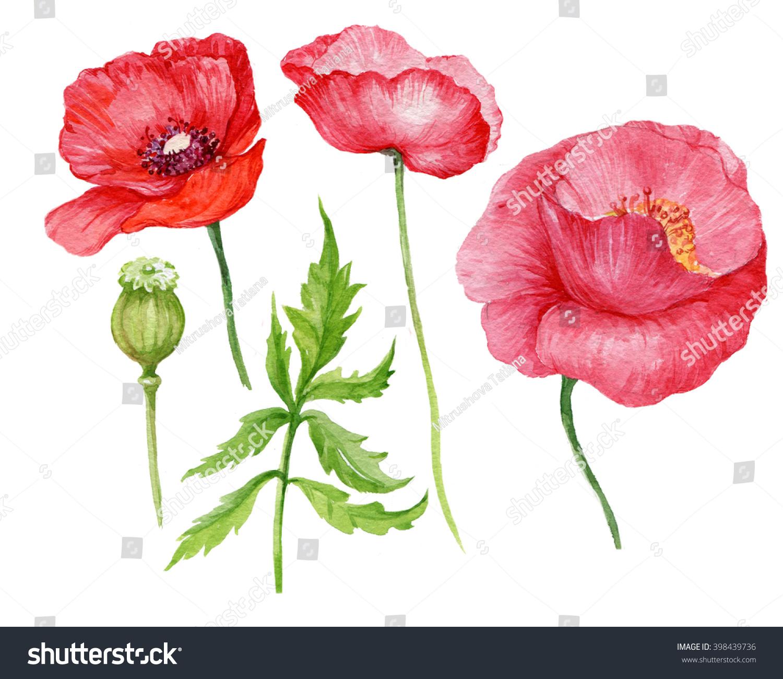 Elements Flower Poppies Watercolor Illustration Stock Illustration