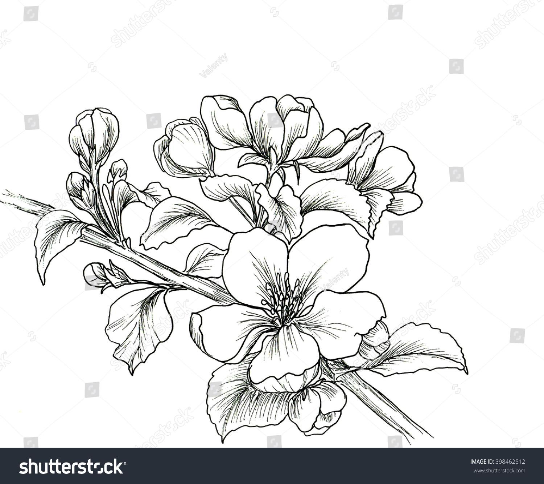 Hand drawn branch of cherry blossom stock photo 398462512 avopix com