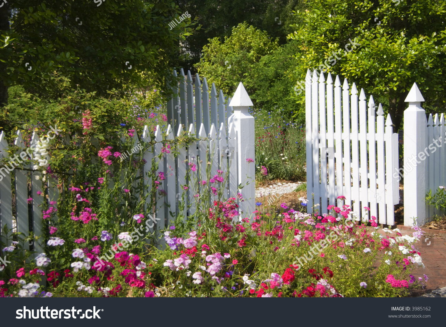 Garden gate white picket fence stock photo
