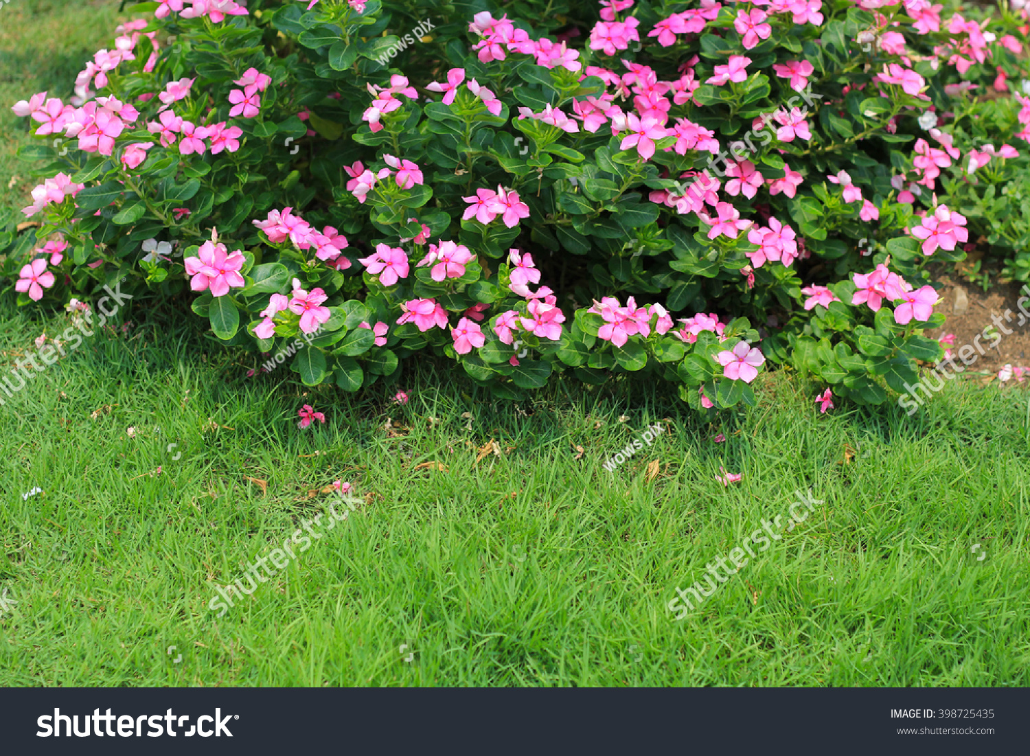 White Pink Flowers Green Grass Background Stock Photo Edit Now
