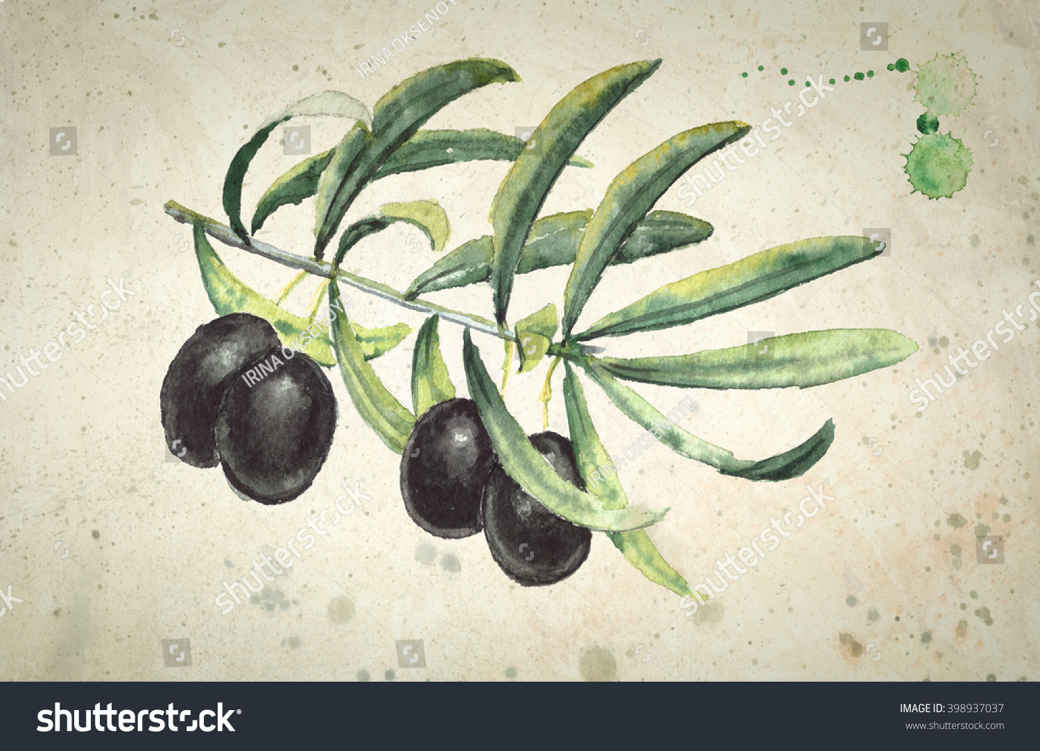 Watercolor Realistic Paintings Ripe Black Olives Stock Illustration ...