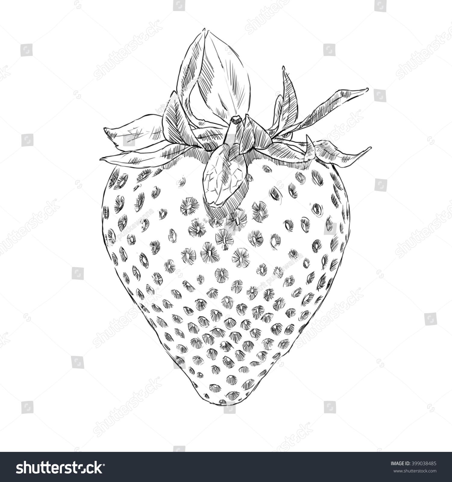 Uncategorized Drawing Of Strawberry drawing strawberry design stock illustration 399038485 shutterstock design