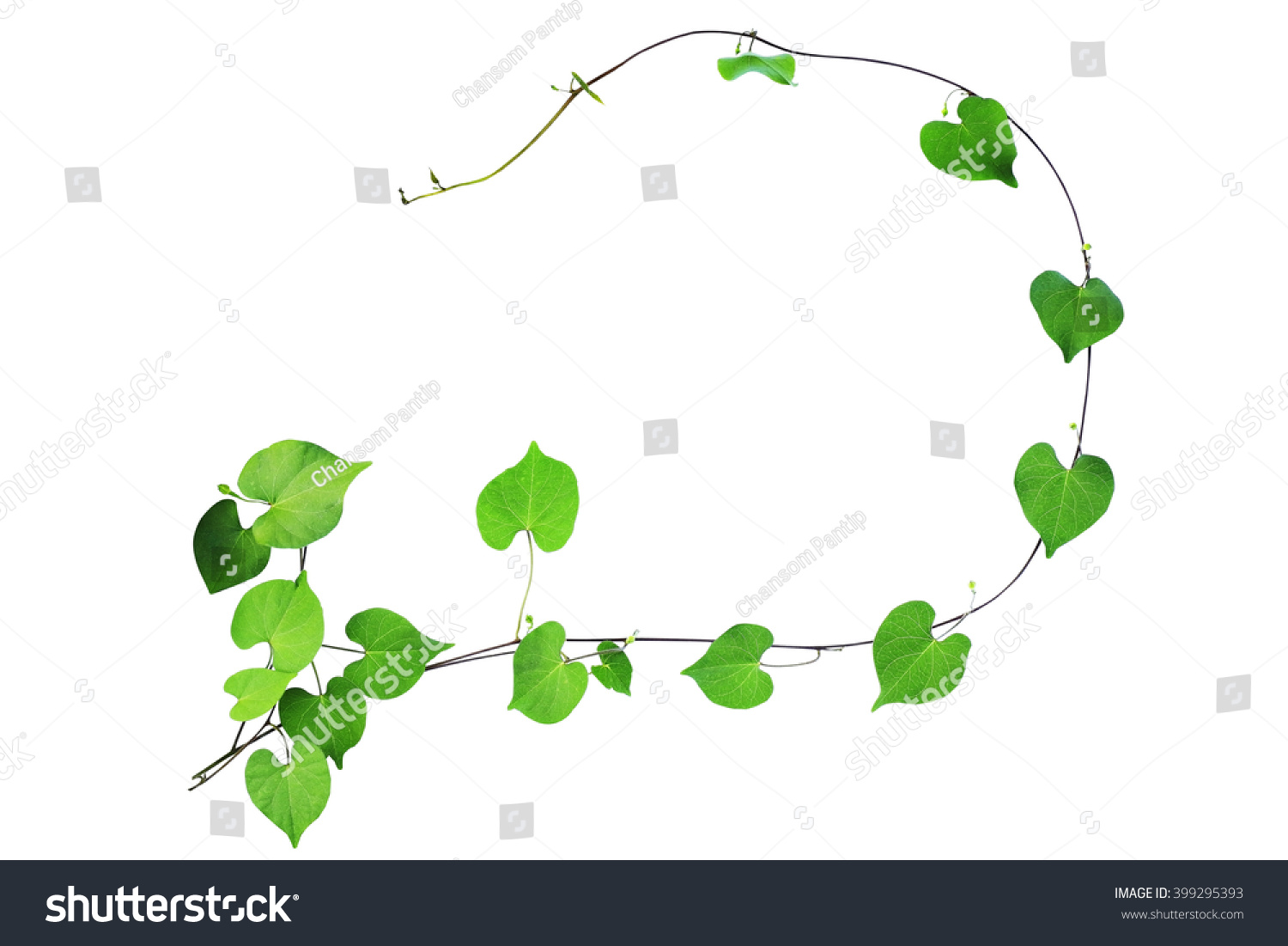 Natural Frame Green Heart Shaped Leaves Stock Photo 399295393 ...