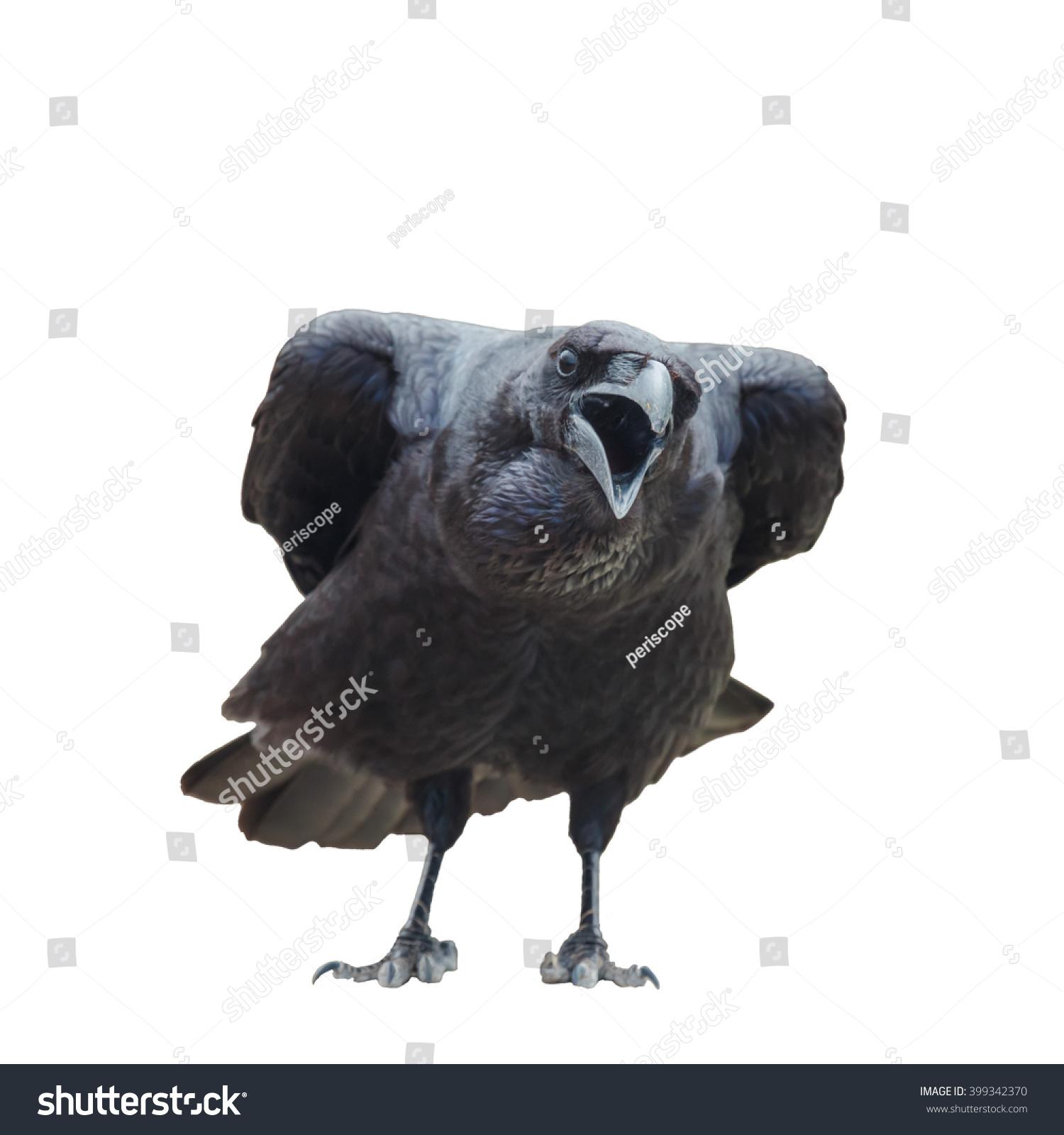 Common Raven Corvus Corax Important Symbol Stock Photo (Edit