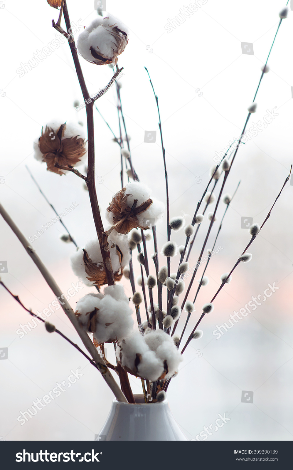 cotton flower pusy willows close white stock photo (royalty free