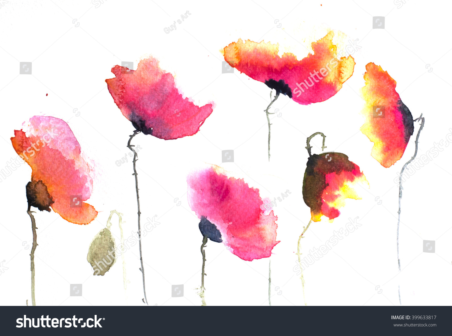 Red Poppy Flower Watercolor Hand Painted On White Paper Ez Canvas
