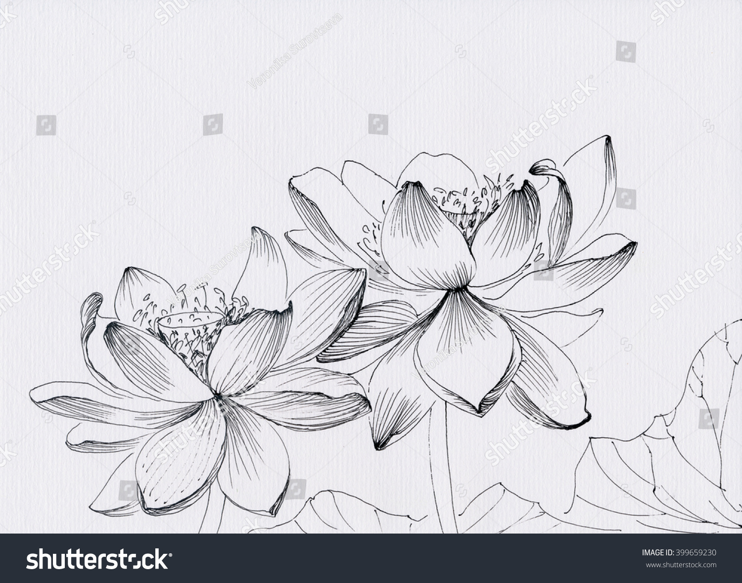 Lotus Flower Line Art Ink Pen Stock Illustration 399659230