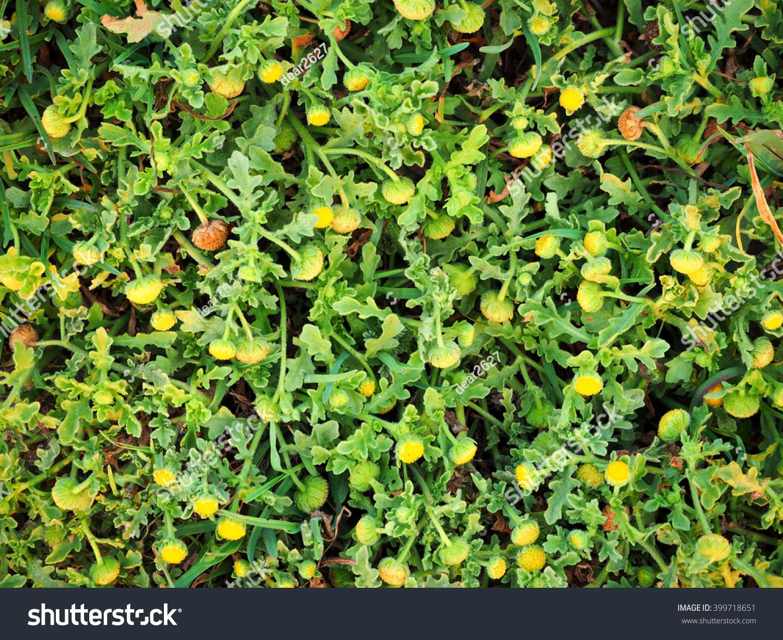 Grass Field Little Yellow Flowers Stock Photo Edit Now 399718651