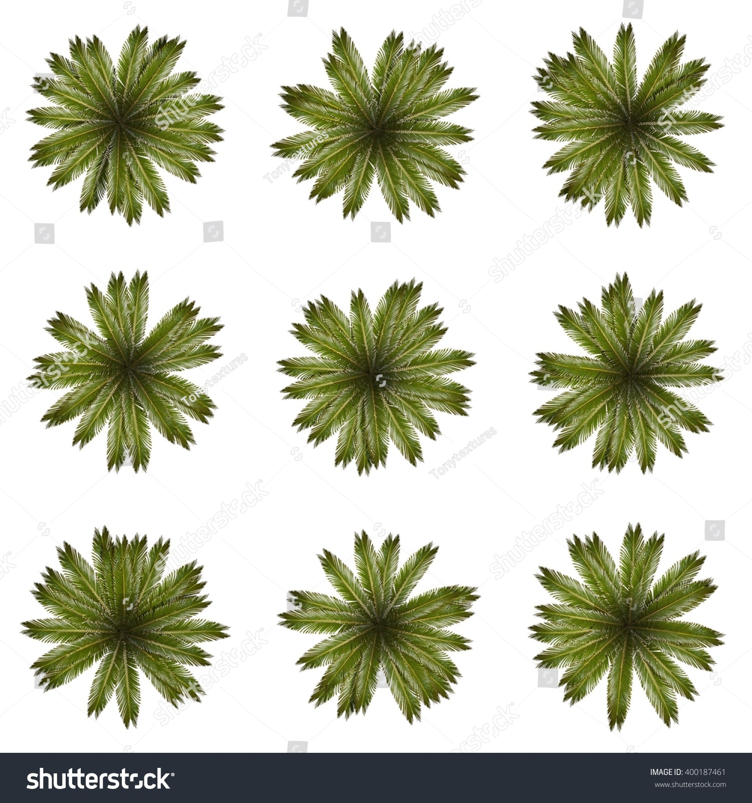 top view cutout palm tree without stock photo 400187461 shutterstock
