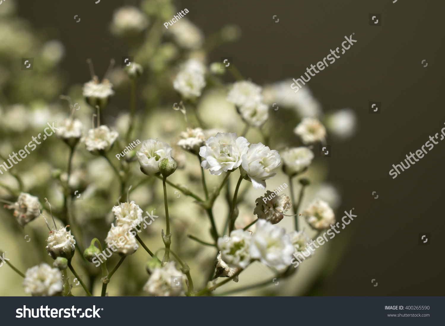 Small White Flowers Bouquet Flowers Stock Photo (Royalty Free ...