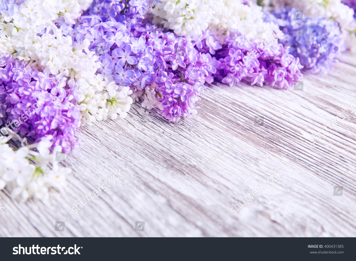 Lilac Flower Wood Background Blooms Pink Stock Photo Edit Now