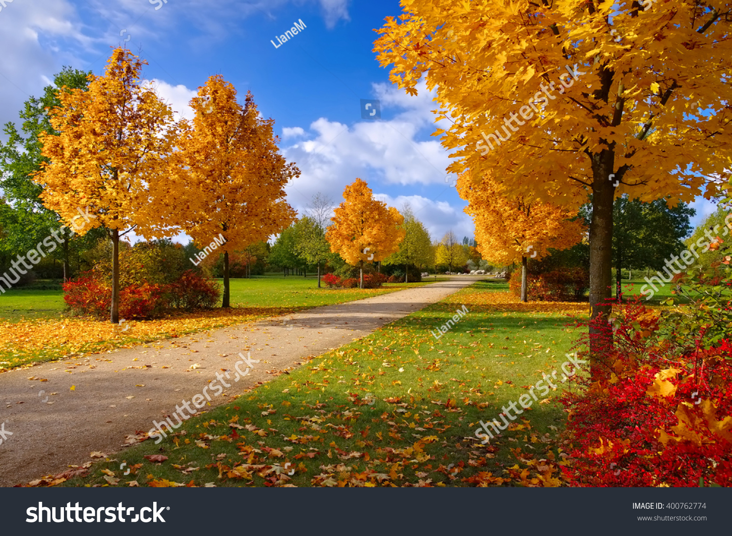 Grossraeschen Avenue Maple Trees Fall Nice Stock Photo