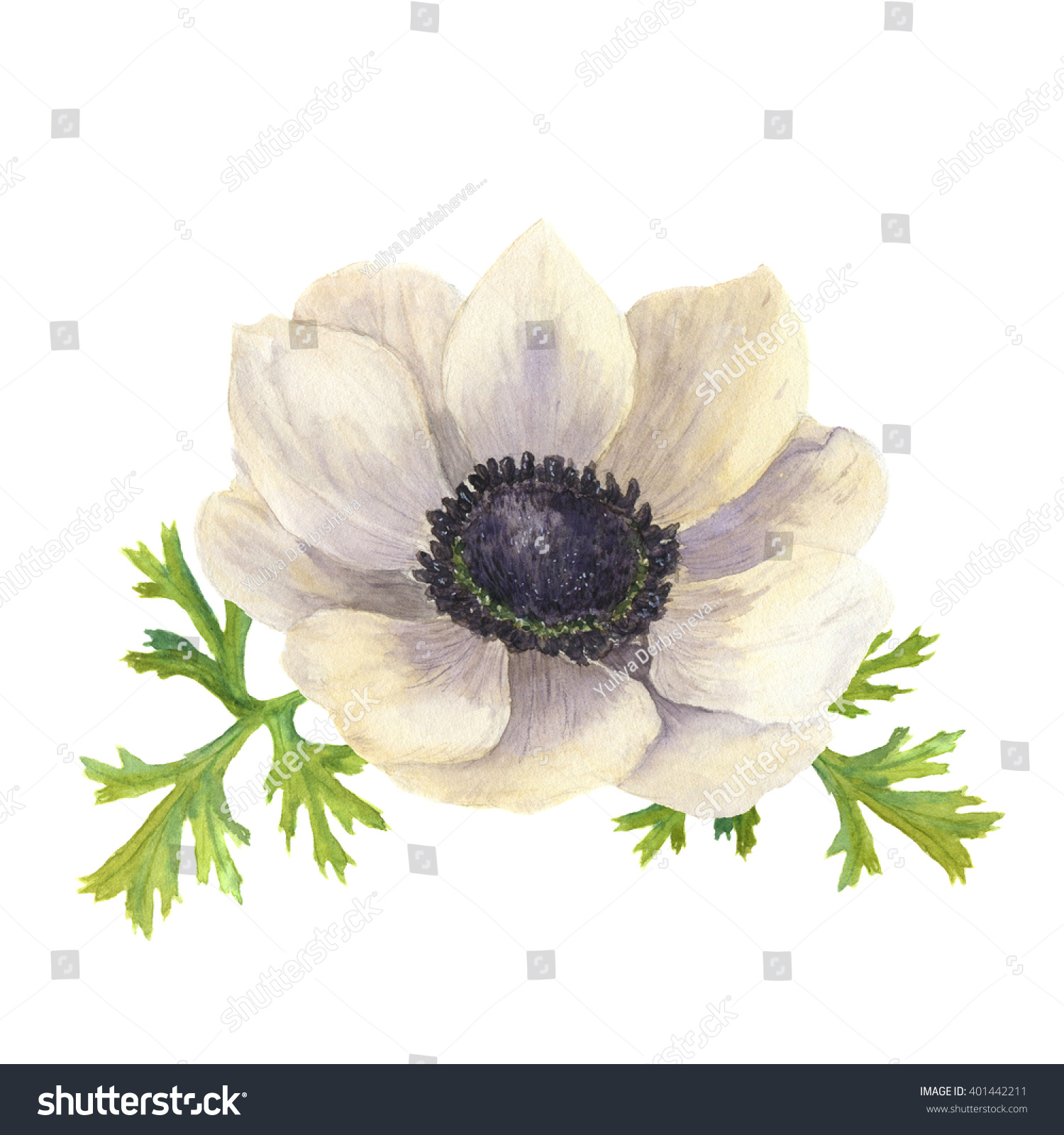Watercolor Anemone Flower Leaves Hand Drawn Stock Illustration