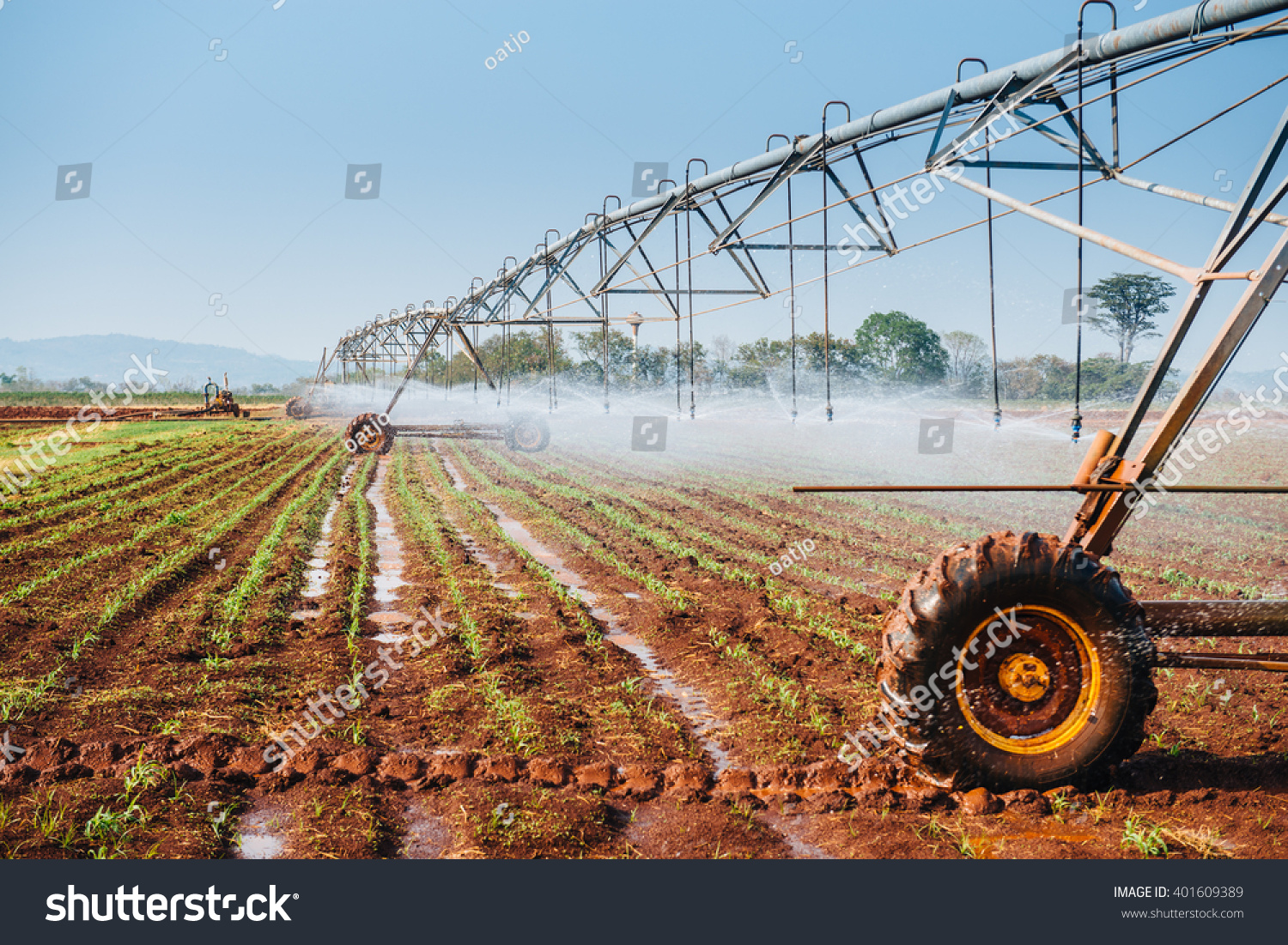 Center pivot sprinkler system watering corn shoots in a corn field