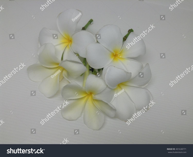 Tropical White Flowers Plumeria Rubra Templetrees Stock Photo Edit