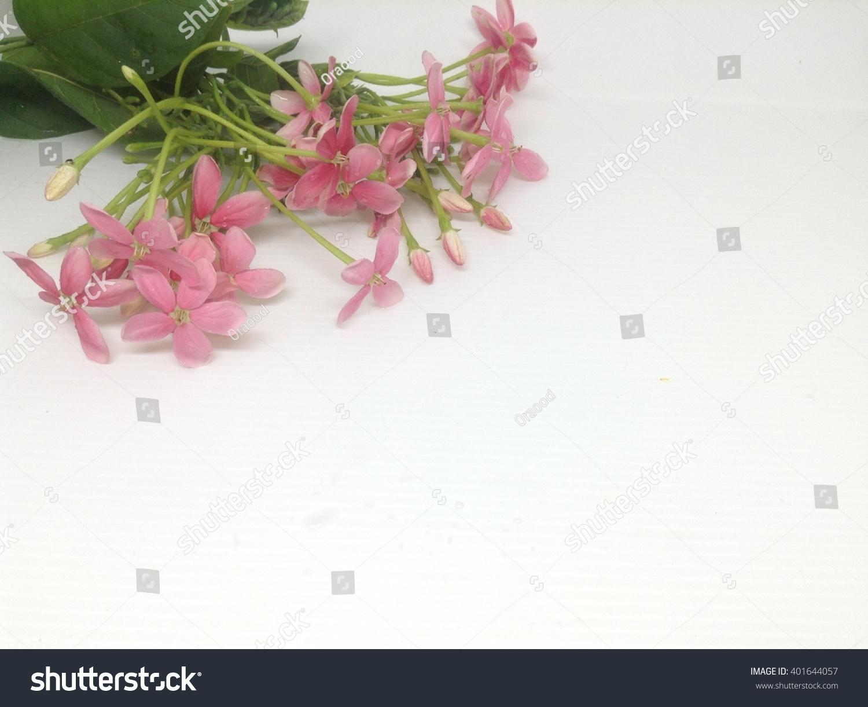 Closeup Meadow Pink Flowers Rangoon Creepers Combretum Indicum On