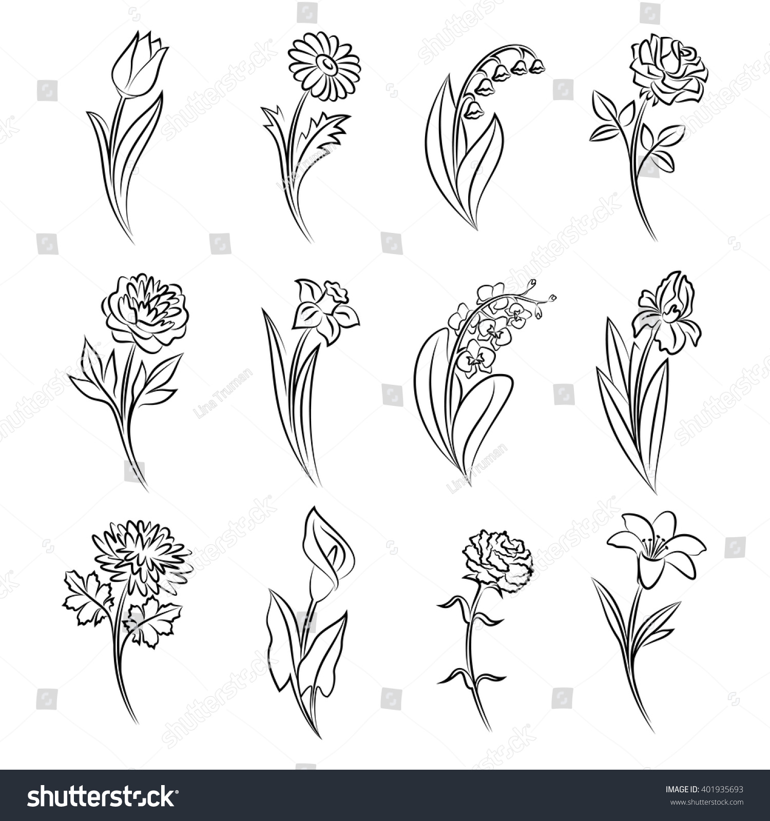 Collection outlined flowers tulip chamomile lily stock vector hd collection of outlined flowers tulip chamomile lily of the valley rose izmirmasajfo Choice Image