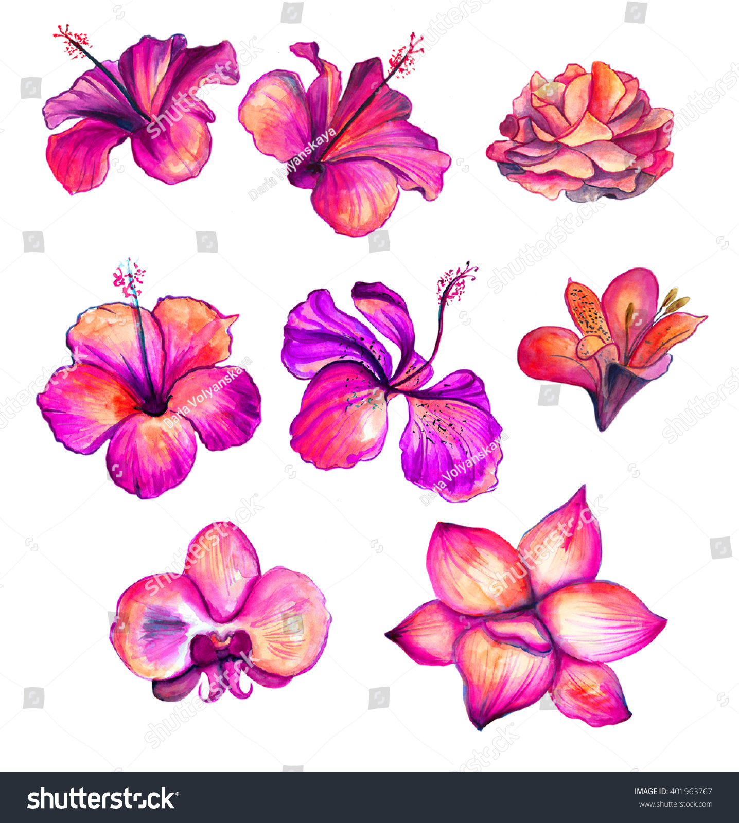 42 Watercolor Lily Tattoos Collection: Bright Red Watercolor Hibiscus Rose Orchid Stock