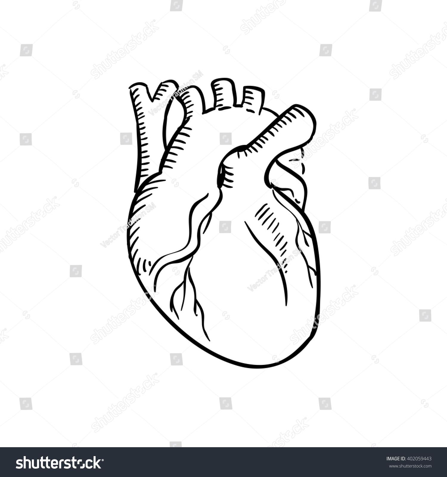 Human Heart Outline Sketch Isolated Anatomical Stock Vektorgrafik