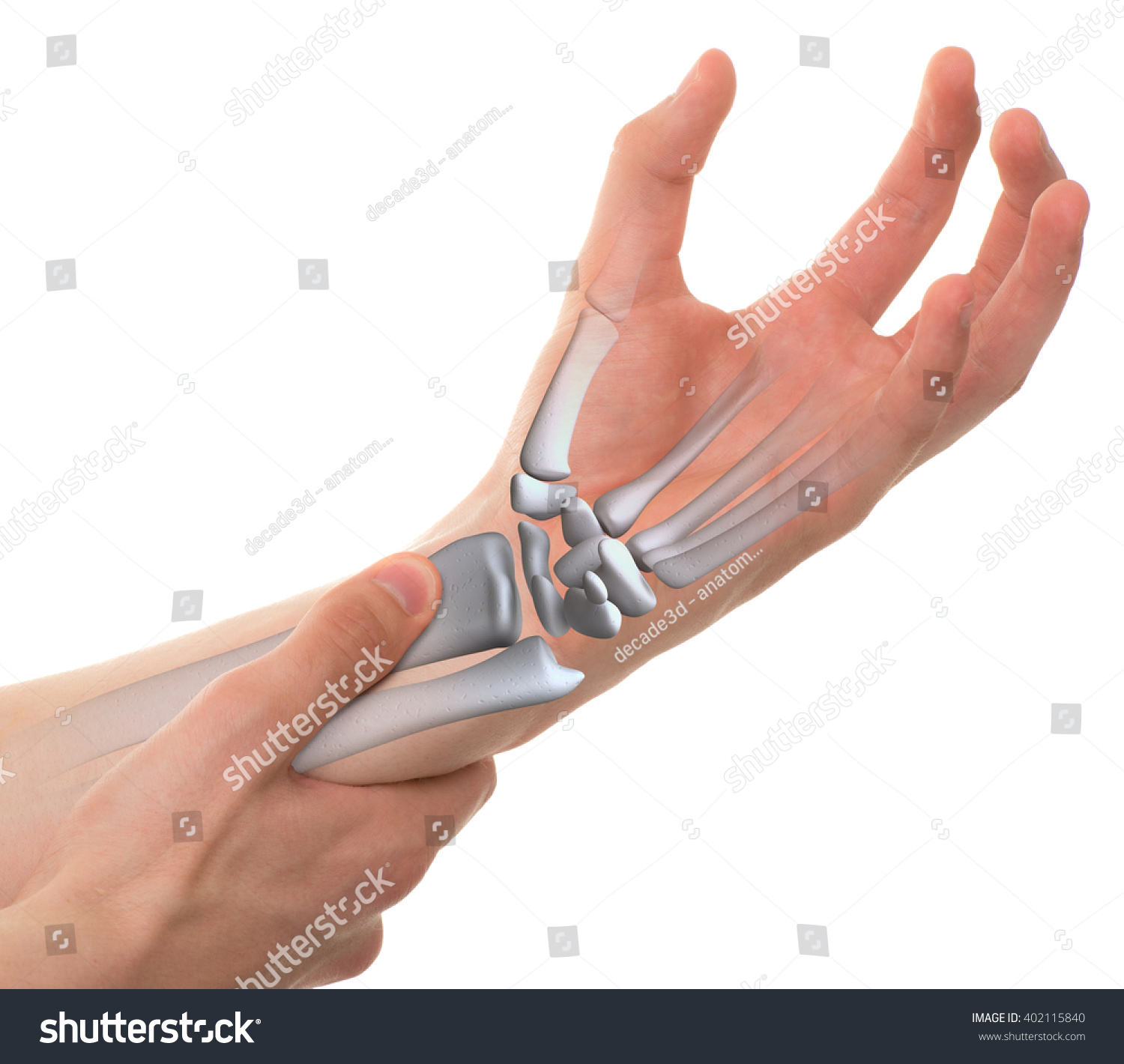 Wrist Bones Real Anatomy Isolated On Stock Photo (Royalty Free ...