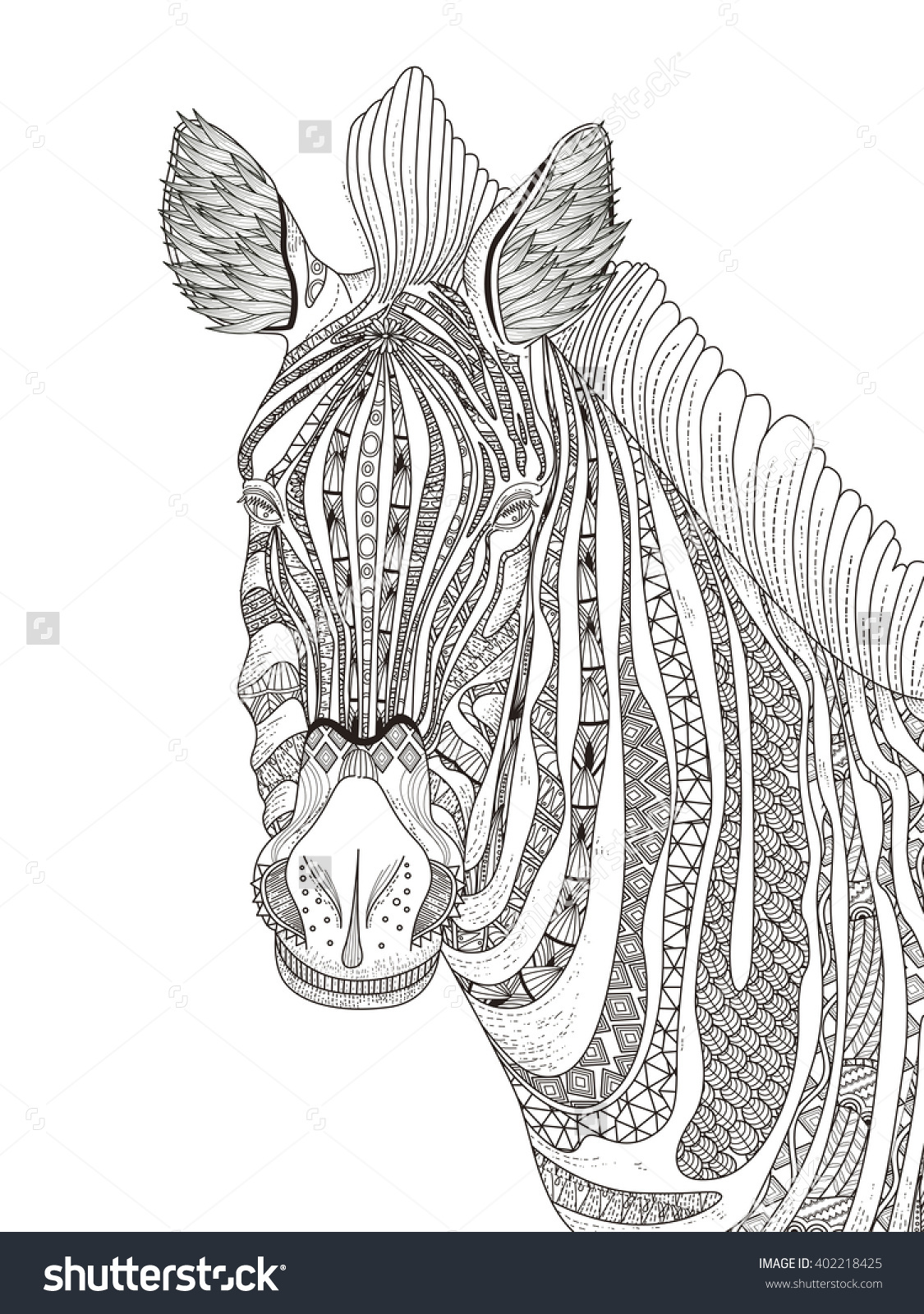 Trendy Fashion Adult Coloring Page Zebra With Attractive Stripes Pages Of Zebras