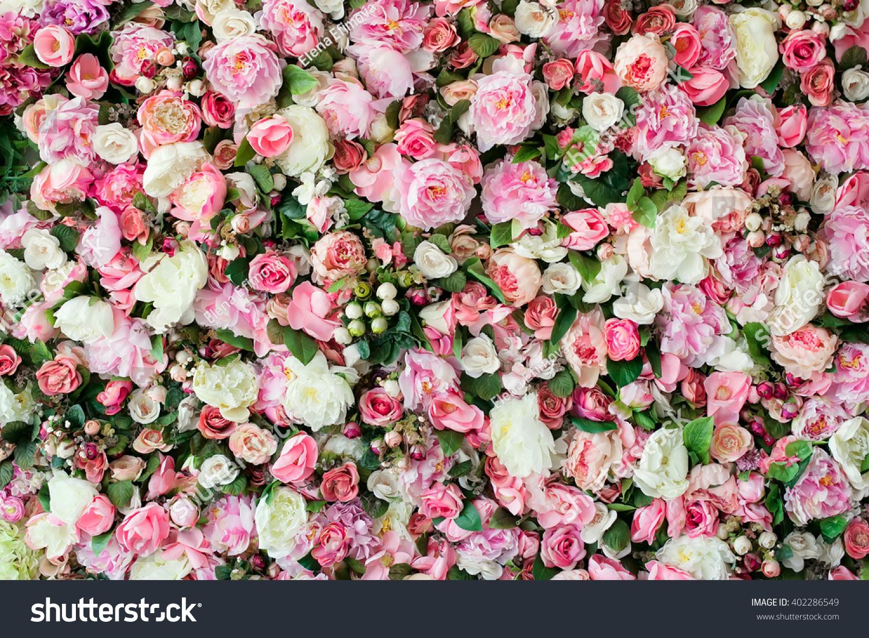 Closeup Image Beautiful Flowers Wall Background Stock Photo Edit
