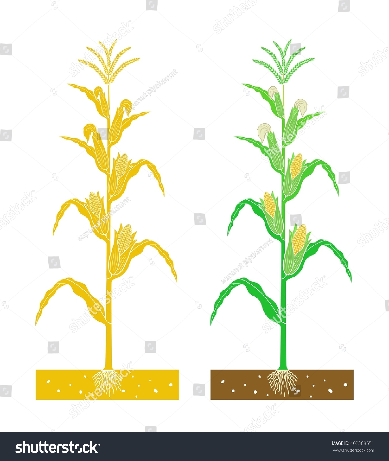the corn planting vocab To bring forth the news recalling, the narrator remembers the environment as  they walked toward the hutchensons' he recalls it being early spring, and i.