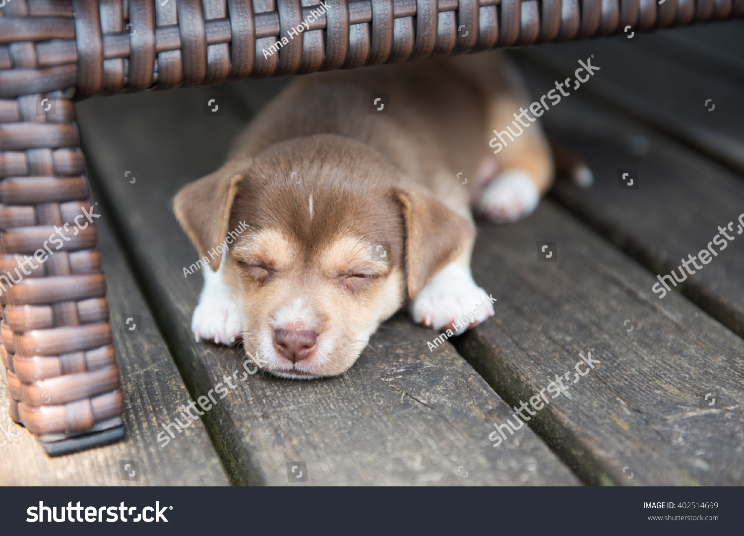 Small puppy sleeping under outdoor furniture