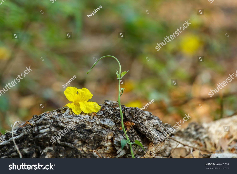 Royalty Free Flowers Yellow Flowersgolden Tree 402662278 Stock