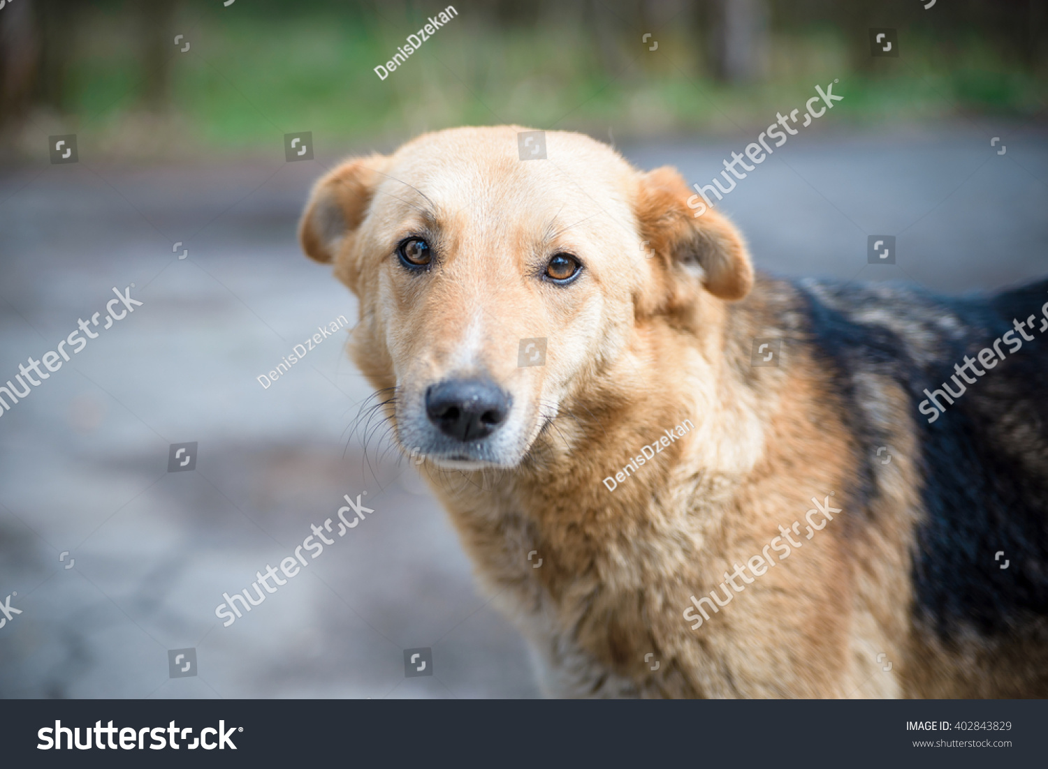 Puppy dog yellow golden background happy stock photo 402843829 puppy dog yellow golden background happy adorable cute sciox Image collections