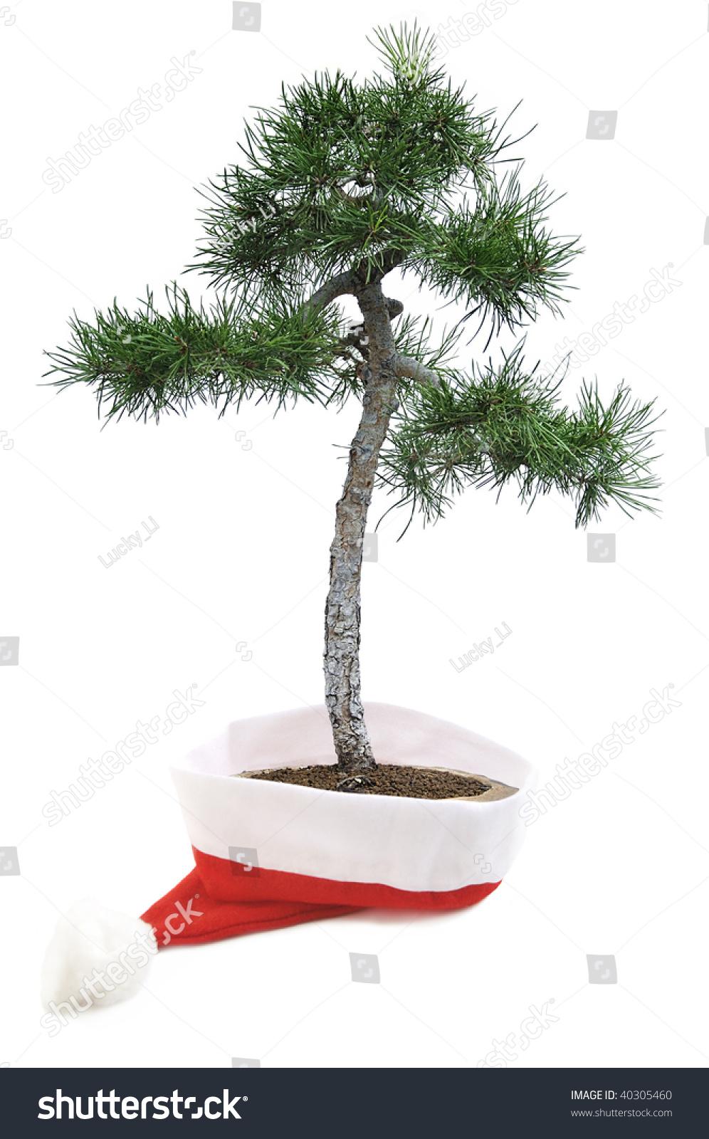 Christmas Tree Pine Bonsai Tree Santa Stock Photo Edit Now 40305460