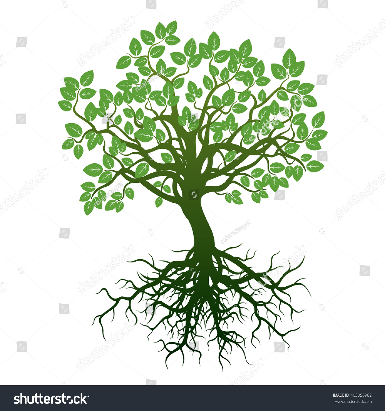 Color Tree Roots Vector Illustration Stock Vector HD (Royalty Free ...